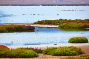 Flamingo spotten in Andalusië. Foto Vivencia Travel